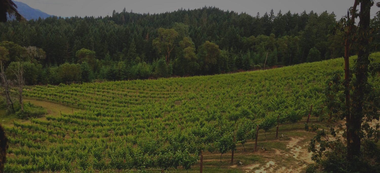 Wines of Elevation